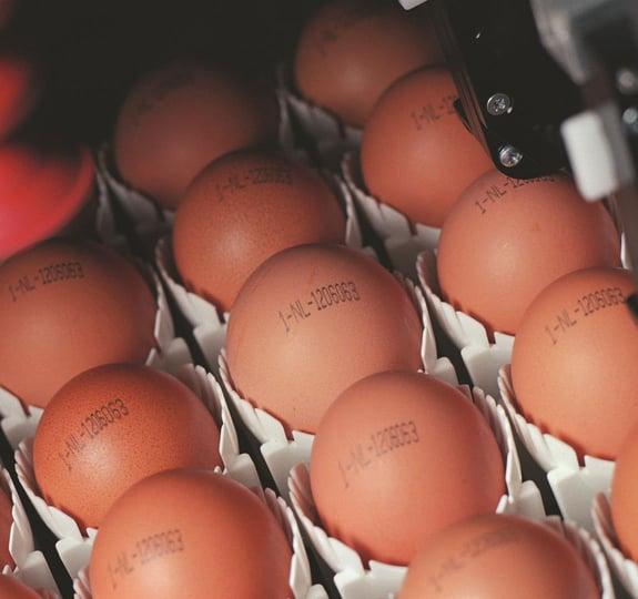 Egg-coding-Ovoprint-(2)