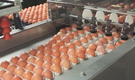 Egg coders