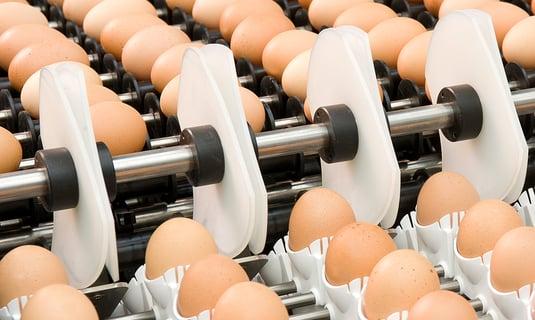 PSPC Egg Setting Machines