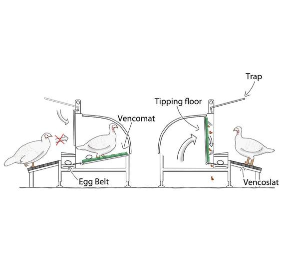 Turkey-Nest-drawing