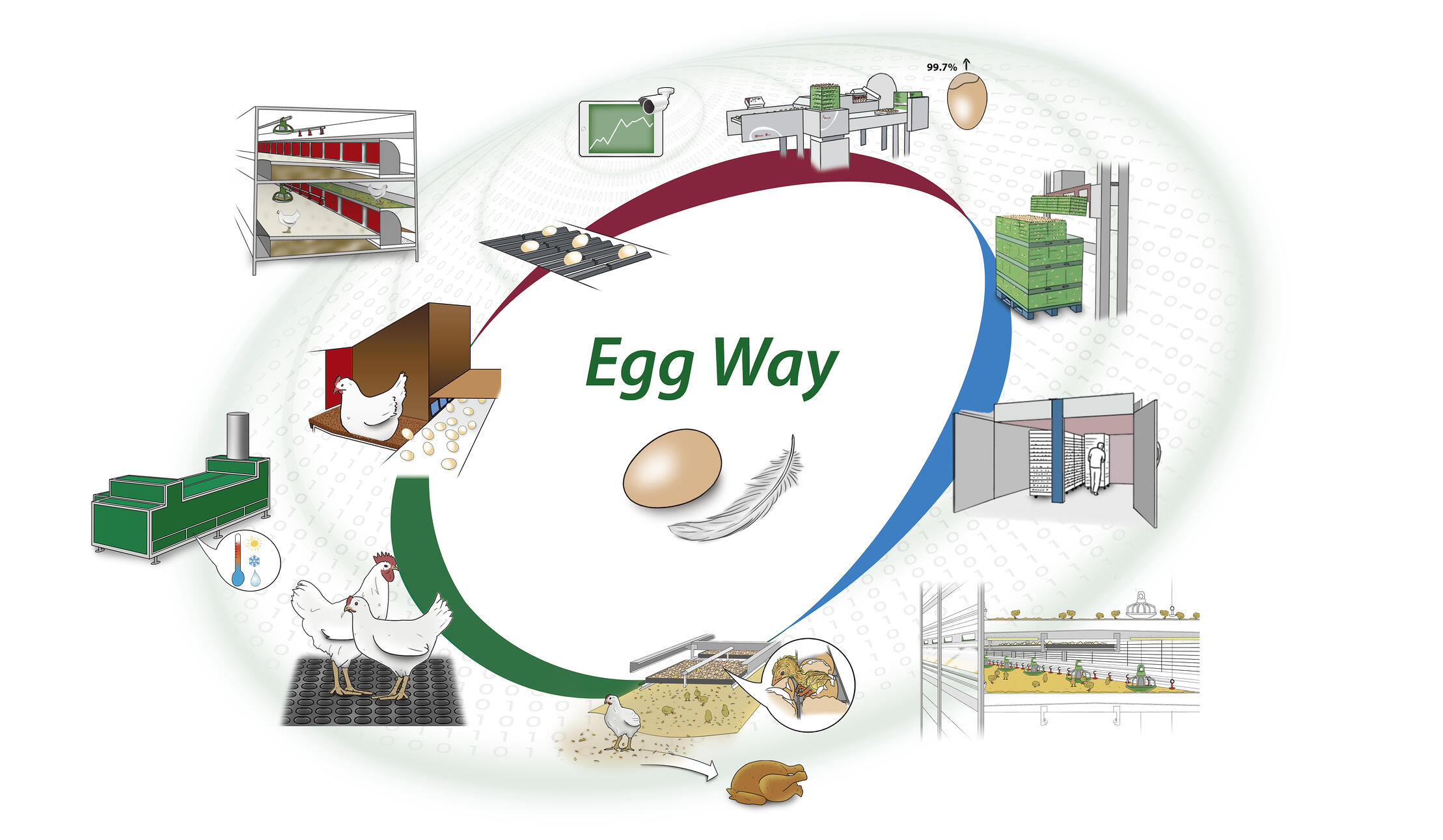 Egg-Way-Poultry-production