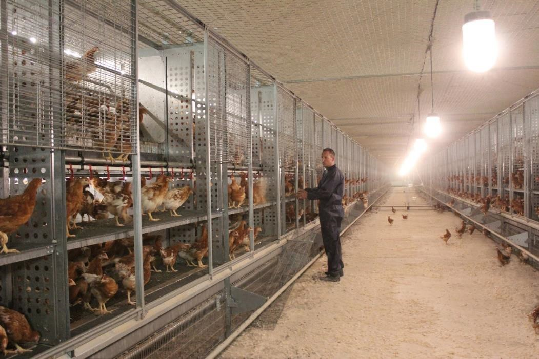 cage free poultry